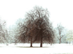 England, Snow covered trees in Hyde park, London by Assaf Frank