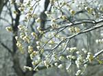 England, Oak trees in hyde park in winter by Assaf Frank