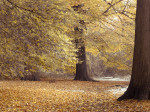 Trees in forest at Autumn by Assaf Frank