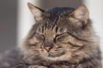 Cat sleeping by Assaf Frank