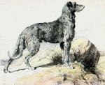 Deerhound (Restrike Etching)