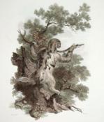 Three-toed Sloth (Restrike Etching) by Julias Caesar Ibbetson