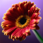 Gerbera II by Erin Rafferty