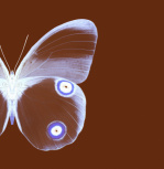 Butterfly 2 by Erin Rafferty