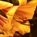 Mellow Yellow by Erin Rafferty