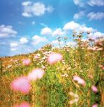 Meadow by Erin Rafferty
