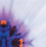 Lilac haze by Erin Rafferty