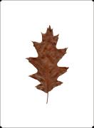 Autumn Leaf IV by Erin Rafferty