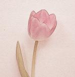Tulip II by Erin Rafferty