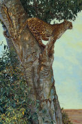 On the Lookout by Kalon Baughan