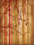 Auburn Stripe by Erin Clark