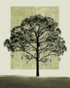 Nature's Shapes I by Harold Silverman