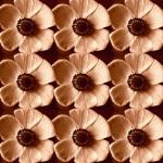 Poppyfield by Katja Marzahn