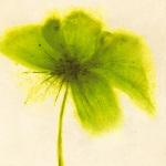 Floral Burst V by Emma Forrester