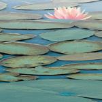 Lily Pool III by Adam Brock