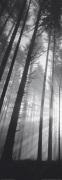 Spencer Butte Park, Sunburst through foggy forest, Oregon by Pacific Stock