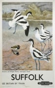 Suffolk - Avocets and Ringed Plover