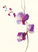 Velvet Orchid by Summer Thornton