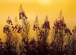 Misty Summer Evening by Peter Lilja