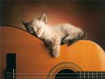Sleeping Soundly by Xavier Chantrenne