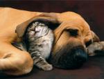 Best Friends by Xavier Chantrenne