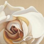 White Rose by Carolina Alotus