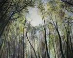 The Canopy by Sandra Moffat