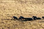 Aerial view of african elephant herd (Loxodonta africana), Okavango Delta, Botswana by Sergio Pitamitz