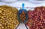 Olive stand, Medina Souk, Marrakech, Morocco by Sergio Pitamitz
