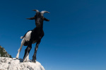 Mountain goat, Gorges du Verdon, Provence, France by Sergio Pitamitz