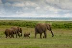 Elephants, Amboseli National Park, Kenya by Sergio Pitamitz