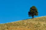 Custer State Park, Black Hills, South Dakota, USA by Sergio Pitamitz