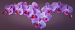 Orchids by Assaf Frank