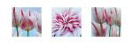 Fresh Blooms Triptych by Ella Lancaster