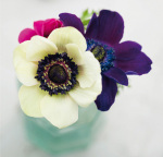 White, Purple and Red Anemones by Ian Winstanley