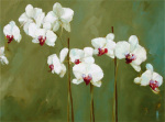 Orchid in Greens by Nicola Acaster