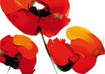 3 Poppies on White by Tibi Hegyesi