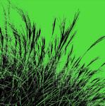 Grass (green) 2011