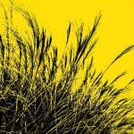 Grass (yellow) 2011