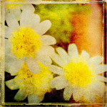 Vintage Garden I by Amie Mack