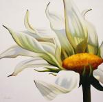Daisy Breeze by Carolina Alotus