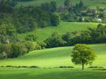 Grass Landscape 57 by Assaf Frank