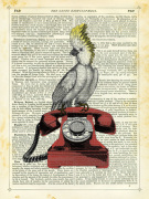 Cockatoo on Telephone