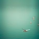 Soul Bird by Keri Bevan