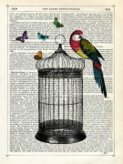 Bird Cage and Parrot