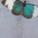 Floating Blue by Keri Bevan