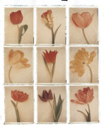 9 Tulips by Deborah Schenck