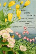 1913-14 Bulbs Plants and Seeds