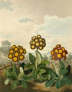 Plate VIII by Samuel Curtis