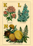 K for Kalmia, L for Larkspur, M for Marigold and Mignonette by John Dicks